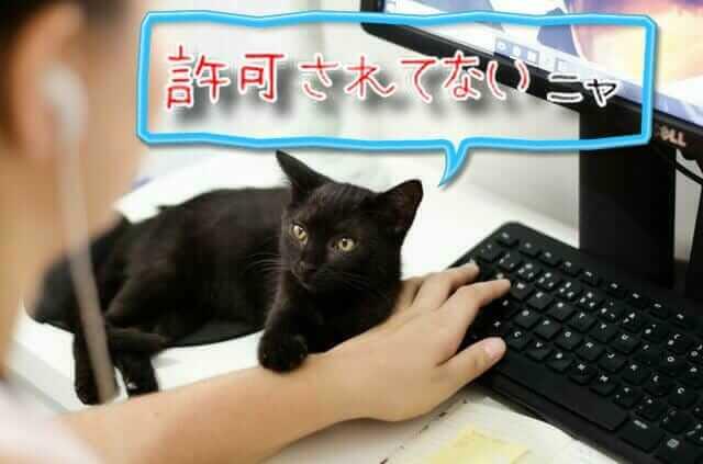 止める黒猫